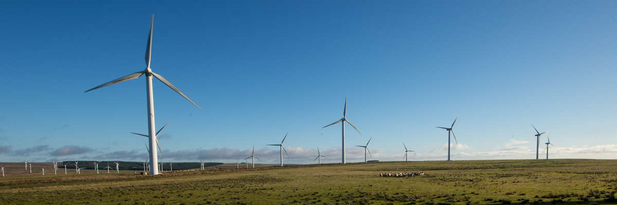 Photo of wind turbines surrounded by green grass and blue skues